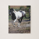 Pinto Paint Horse Puzzles