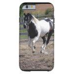 Pinto Paint Horse Tough iPhone 6 Case