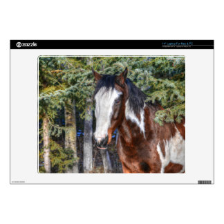 Pinto Paint Stallion & Evergreen Trees Decals For Laptops