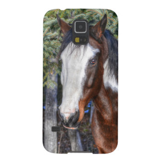 Pinto Paint Stallion & Evergreen Trees Galaxy S5 Cover
