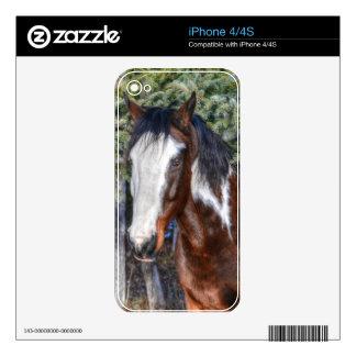 Pinto Paint Stallion & Evergreen Trees iPhone 4S Skins