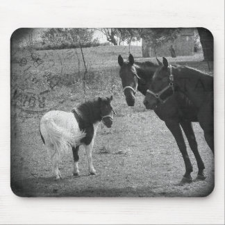 Pinto Pony and Horses Mouse Pad