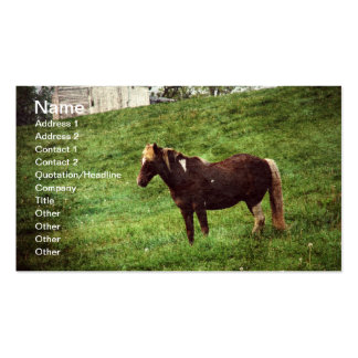Pinto Pony Double-Sided Standard Business Cards (Pack Of 100)