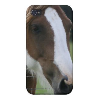 Pinto Pony iPhone Case iPhone 4 Covers