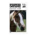 Pinto Pony Postage Stamp