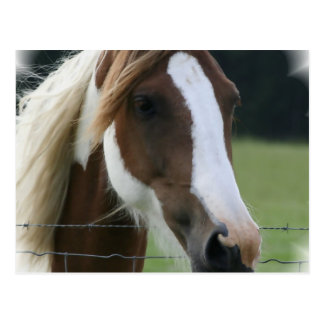 Pinto Pony Postcard