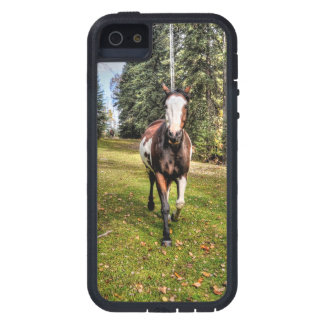 Pinto Ranch Horse Running in a Forested Field iPhone 5 Cover