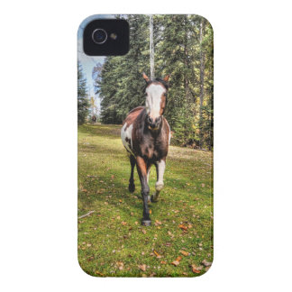 Pinto Ranch Horse Running in a Forested Field iPhone 4 Case