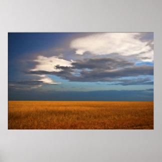 Pintura al óleo de la multa del campo de trigo póster