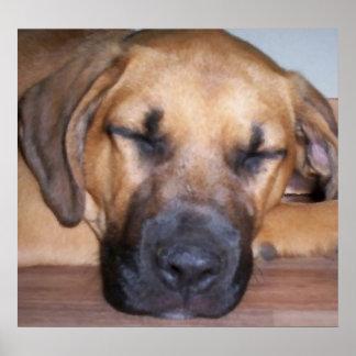 Pintura al óleo dejada del sueño de los perros el  impresiones