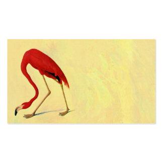 Pintura americana del flamenco de Audubon Tarjetas De Visita