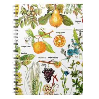 Pintura anaranjada de la uva de la pera de la frut cuadernos