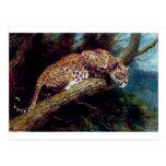 pintura antigua animal del gato salvaje del leopar tarjeta postal