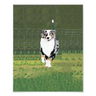 """Pintura australiana del """"perrito feliz"""" del pastor fotografías"""