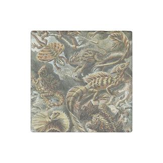 Pintura barbuda de la iguana del dragón del lagart imán de piedra
