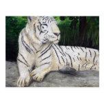 Pintura blanca del tigre de Ben Jones Postales