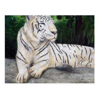 Pintura blanca del tigre de Ben Jones Tarjetas Postales