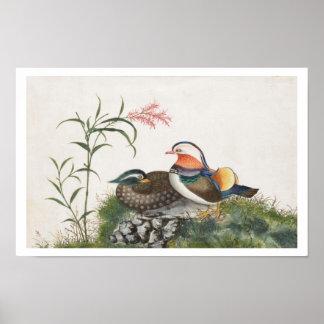 Pintura china del pato de mandarín poster