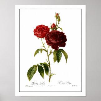 Pintura de color rojo oscuro de los rosas del póster
