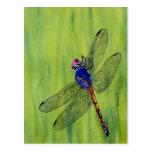 Pintura de la acuarela de la libélula tarjetas postales