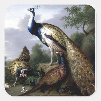 Pintura de la familia de pájaro del pavo real pegatina cuadrada