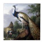 Pintura de la familia de pájaro del pavo real teja