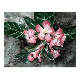 Pintura de la flor del rosa de desierto postal
