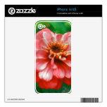 Pintura de la flor del Zinnia Calcomanías Para iPhone 4S
