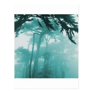 Pintura de la foto de la niebla de Forrest Postales