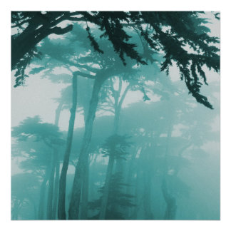 Pintura de la foto de la niebla de Forrest Póster