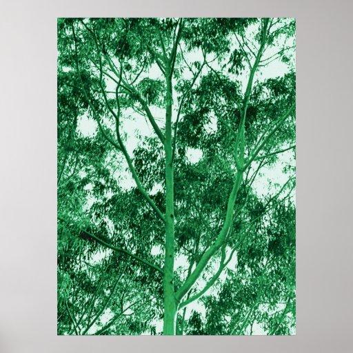 Pintura de la foto del árbol de eucalipto póster