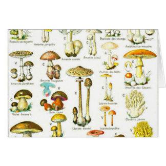 Pintura de la naturaleza del hongo de seta de tarjeta pequeña