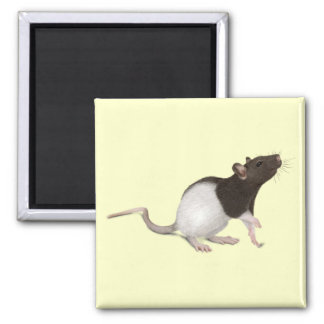 Pintura de la rata del mascota imán cuadrado