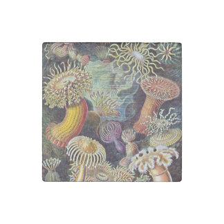 Pintura de la vida del océano de la anémona de mar imán de piedra