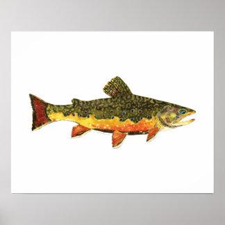 Pintura de los pescados de la trucha de arroyo póster