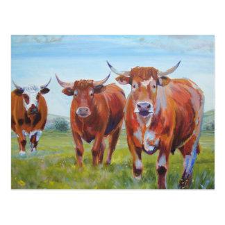 Pintura de tres toros postales