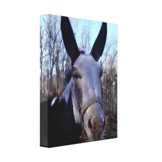 Pintura del burro lona envuelta para galerias