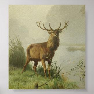 Pintura del ciervo común impresiones