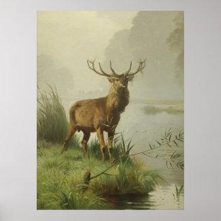 Pintura del ciervo común poster