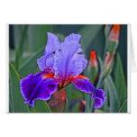 Pintura del iris, sombras de la púrpura con acento tarjeta