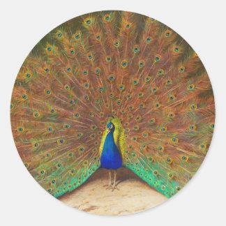 Pintura del pavo real del vintage pegatina redonda