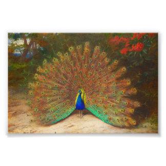 Pintura del pavo real del vintage impresion fotografica