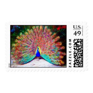 Pintura del pavo real del vintage sello postal