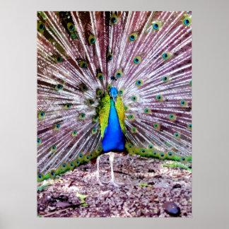 Pintura del pavo real posters
