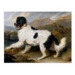 Pintura del perro de Terranova Tarjeta Postal