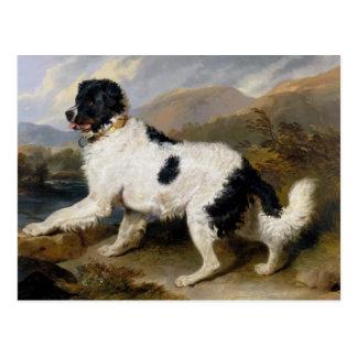 Pintura del perro de Terranova Postal