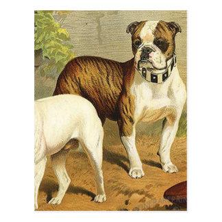 Pintura del vintage de dogos ingleses tarjeta postal
