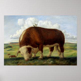 Pintura del vintage de un toro de Hereford Póster