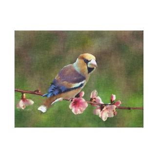 Pintura digital del hawfinch europeo lona envuelta para galerias