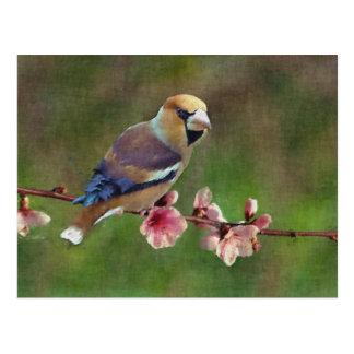Pintura digital del hawfinch europeo postales